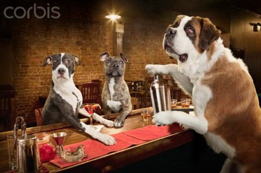 Three dogs drinking in bar --- Image by © Dale May/Corbis